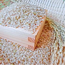 升に入った玄米と稲の穂